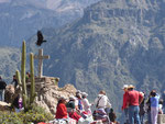 This condor was posing for my picture... This viewpoint is called Cruz del Condor (Cross of the Condor)