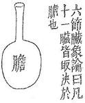 « La vésicule biliaire contient le fiel ; elle a la forme d'un vase fait pour contenir du vin. »