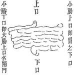 L'intestin grêle « décrit 16 courbures en commençant par la gauche ; sa longueur est de 3 tchang (1 tchang = 3,14 m.)... »