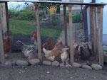 Und bei dieser Gelegenheit will ich nicht unerwähnt lassen, dass wir auch noch an einem Hühnerstall vorbeigelatscht sind. Tiere sind toll!
