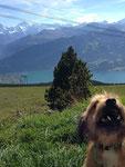 Und selbst die Berner Alpen hat Fozzie schon gesehen!