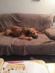 ...und SCHWUPP - im neuen zu Hause hat Fozzie gleich die Couch eingenommen.