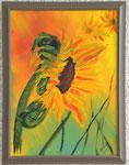 Sonnenblume 2016 Acyl auf Leinwand 40 x 30 cm (verkauft)