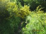 végétation dense sous le Col d'Arras fauchée par la CCVA en juin 2009