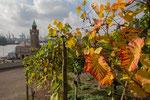 21 181016 Herbst am Stintfang