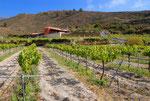 Casa y viñedo