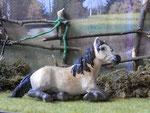 La tienne Monique, zwischenzeitlich in 112-köpfiger Falabellaherde gesichtet, derzeitiger Aufenthalt unbekannt