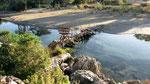 Bridge, Andriake