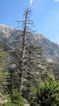 Dead tree, Tahtali