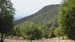Dark green coniferous forest, Karliöz Tepe