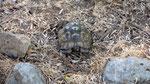 Turtle, Bogazici