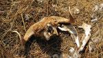 Carcass, Yumrutepe Rakim