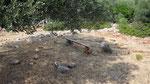 Cosy bench under tree, no man's land