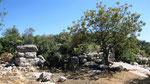 Overgrown runis, Gökceören