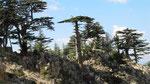 Trees, Tahtali