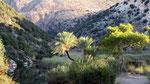 Palm trees, Andriake