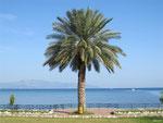 Palm Tree, Finike