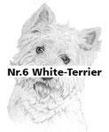 Nr.6 White-Terrier