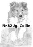 Nr.82 Jg. Collie