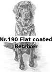 Nr.190 Flat coated Retriver