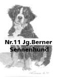 Nr.11 Jg.Berner Sennenhund