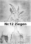 Nr.12 Ziegen