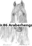 Nr.86 Araberhengst