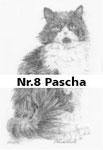 Nr.8 Pascha