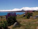 Lake Purkaki Tekapo
