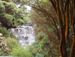 Rotorua Hells Gate