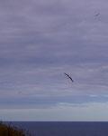 Albatros Colony Dunedin