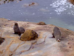 In der Nähe der Moeraki Boulders
