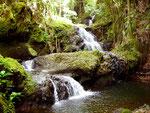 Tropical Botanical Garden, Big Island, Hawaii, USA