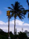 Poipu Beach, Kaua'i, Hawaii, USA