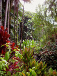 Tropical Botanical Garden, Big Island, Hawaii, USA