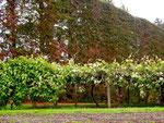 Kiwi Plantage in Whakatane