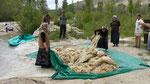 Lavage de la laine à la rivière