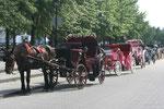 Calèche dans le vieux Montréal
