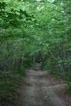 Sous bois entre Mons et Bourguignon