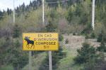 Soyez prudents - Les animaux ne sont pas que sur les panneaux