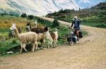 Altiplano-Pérou