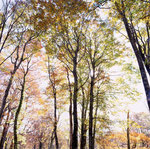 森の光(玉原)