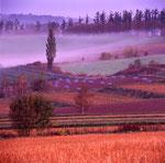 朝霧の丘(美瑛)