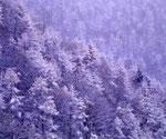 雪の峠(玉原)