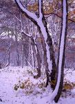 初雪の森(玉原)