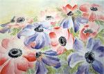 anemonen, aquarel/conté 46 x 65 cm