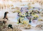 spiegeling in de natuur, aquarel 52 x 71 cm
