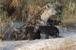 Hyena Cubs with Mother, Hyena jongen met moeder