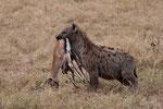 Hyena with Impala, Hyena met Impala