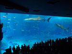 世界最大級の水槽がある「美ら海水族館」